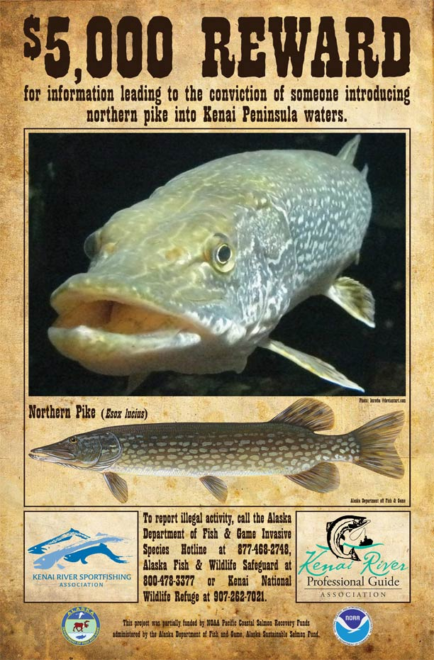 ADF&G Pike Reward Poster